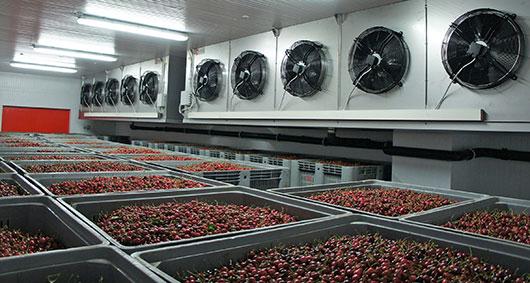 celle frigorifere per frutta
